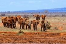 promotions-vacances-selectour-voyages-safari.jpg