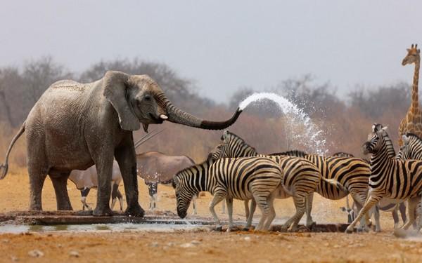 voyages selectour promotions Afrique